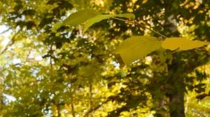 Tree leaves still green.
