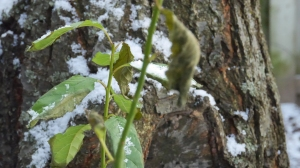 Snow fallen on the leaf.